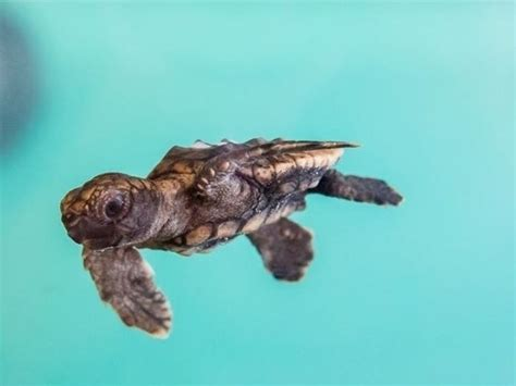 1st Sea Turtle Nests Spotted; Beach Goers Reminded To Take