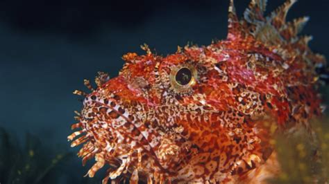 Ouch! Avoid these 12 sea creatures in Malta that can hurt you