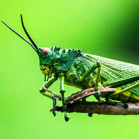 Join the Picture Insects Photo Contest and win Polaroid