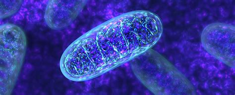 Newly Discovered Microbe Does Something Textbooks Say Is